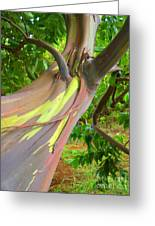 Eucalyptus Tree Greeting Card