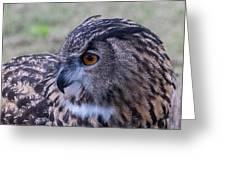 Eurasian Eagle Owl Greeting Card
