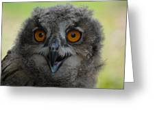 Eurasian Eagle Owl Chick Greeting Card