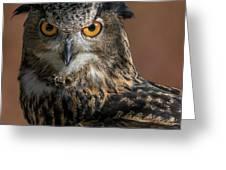 Eurasian Eagle Owl Iv Greeting Card
