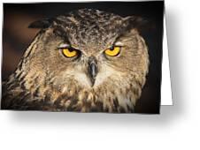 Eurasian Eagle Owl Portrait Greeting Card