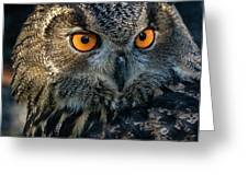 Eurasian Eagle Owl Greeting Card