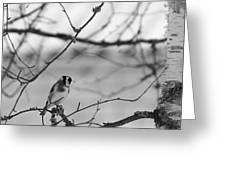 European Goldfinch 1 Greeting Card