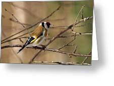 European Goldfinch 5 Greeting Card