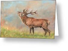 European Red Deer Greeting Card
