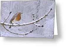 European Robin On Snowy Branch Greeting Card