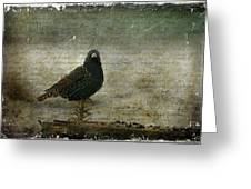 European Starling Greeting Card