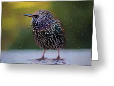 European Starling - Painted Greeting Card