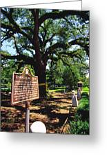 Evangeline Oak St Martinville Louisiana Greeting Card