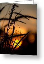 Evening Arrives Greeting Card