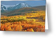 Evening Aspen Greeting Card