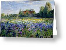 Evening At The Iris Field Greeting Card