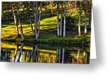 Evening Birches Greeting Card