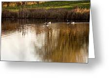 Evening By The Pond Greeting Card