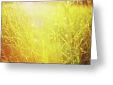 Evening Field Greeting Card