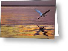 Evening Flight Greeting Card