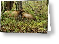 Evening Forage Greeting Card