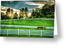Evening Graze In Tennessee Greeting Card