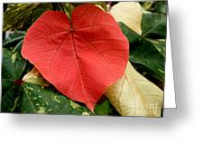 Evening Hau Tree Leaves Greeting Card