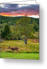 Evening In The Valley Greeting Card