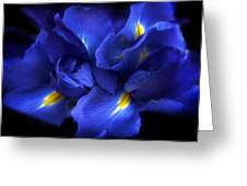 Evening Iris Greeting Card