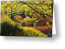 Evening Light 1 Greeting Card