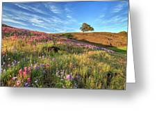 Evening Light At North Table Mountain Greeting Card