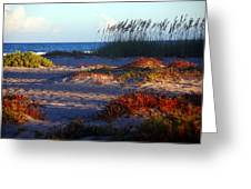 Evening Light At The Beach Greeting Card