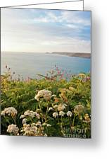 Evening Light In Cornwall Greeting Card
