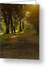Evening Path Greeting Card