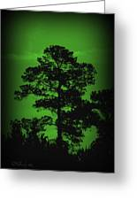Evening Pine Greeting Card