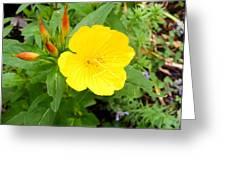 Yellow Sundrop Greeting Card
