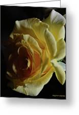 Evening Rose Greeting Card