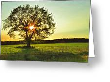 Evening Shadows Greeting Card by Lori Frisch