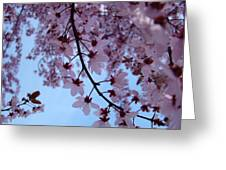 Evening Sky Pink Blossoms Art Prints Canvas Spring Baslee Troutman Greeting Card