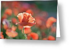 Evening Sun Illumination Greeting Card