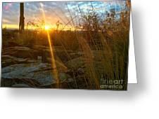 Evening Sun Rays In The Desert Greeting Card