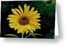 Evening Sunflower Greeting Card