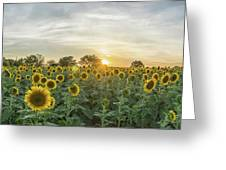 Evening Sunflowers Greeting Card