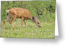 Evening Visitor Greeting Card
