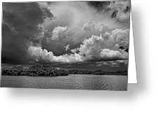 Everglades 0257bw Greeting Card