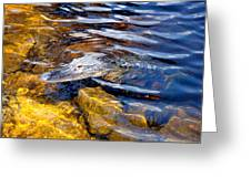 Everglades Alligator Greeting Card