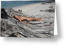 Everglades City Beauty 623 Greeting Card