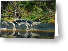 Everglades Crocodile Greeting Card