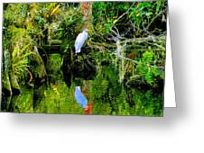 Everglades Egret Greeting Card