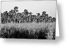 Everglades Grasses And Palm Trees 2 Greeting Card