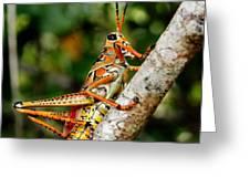 Everglades Grasshopper Greeting Card