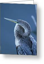 Everglades Greeting Card