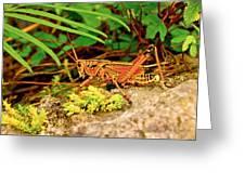 Everglades Locust Greeting Card
