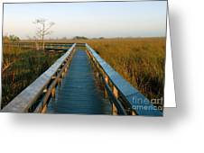 Everglades National Park Greeting Card